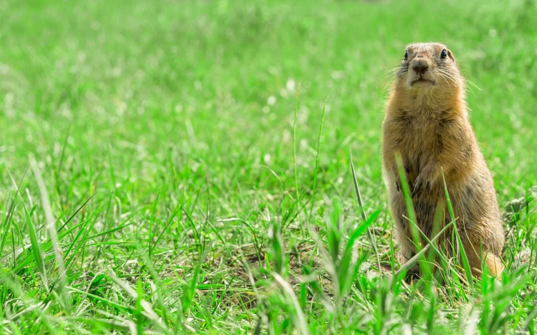 Can We Plan Better Than a Groundhog?